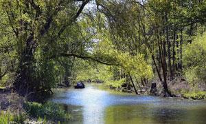 河两岸枝繁叶茂的树林摄影高清图片