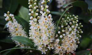 纷纷绽放的白色花植物摄影高清图片