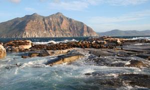 聚集在海边岩石上的海豹们高清图片