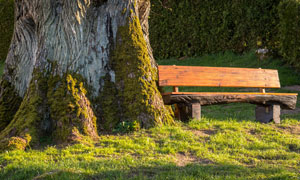 大树下的简陋木质长椅摄影高清图片