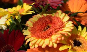 在彼此交错绽放的鲜花摄影高清图片