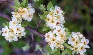 树枝上的点点小花特写摄影高清图片