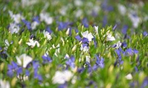 花田里生长的多种花卉植物高清图片