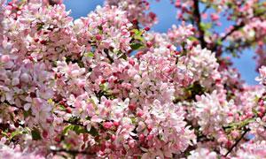 春天花团锦簇美景特写摄影高清图片