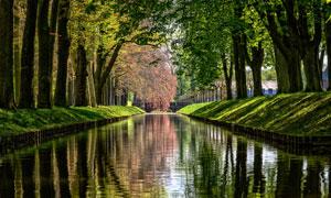 在平静河水两岸的树木摄影高清图片