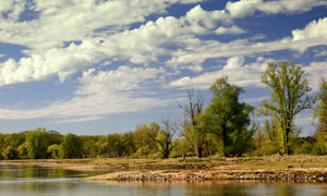 朵朵白云与水边的树丛摄影高清图片