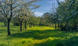 鲜花树木与葱郁的草地摄影高清图片