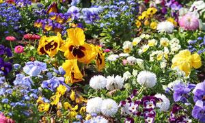 春天里争奇斗艳的花卉摄影高清图片