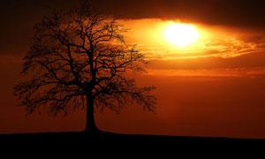 黄昏时大树剪影与夕阳摄影高清图片