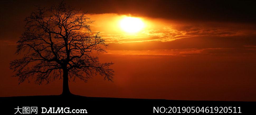 黃昏時大樹剪影與夕陽攝影高清圖片