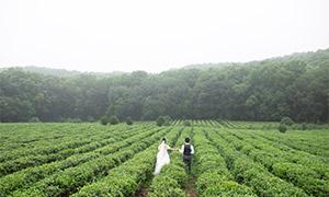 树木茶园自然风光婚纱外景摄影原片