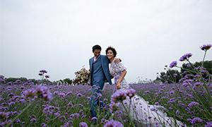 紫色花丛中的恋人婚纱摄影原片素材