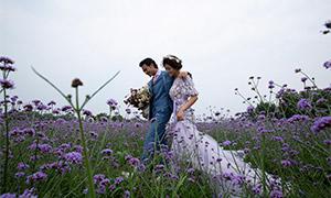 树木花海外景风光婚纱摄影原片素材