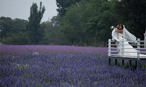 茂密树丛与田园婚纱照摄影原片素材