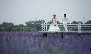 花海观景台外景婚纱照摄影原片素材