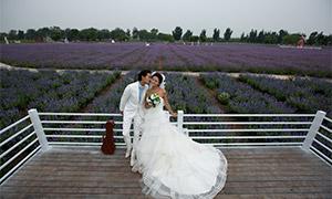 花田里靠着栏杆的恋人婚纱原片素材