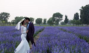 薰衣草与绿树外景婚纱摄影高清原片