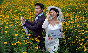 在菊花丛中的恋人婚纱摄影高清原片