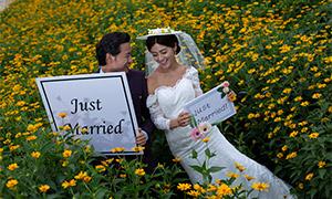 菊花丛中的婚纱照摄影高清原片素材