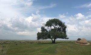 蓝天下的草原和大树摄影图片