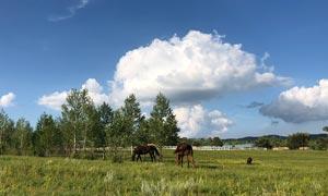 蓝天白云下的养马场高清摄影图片