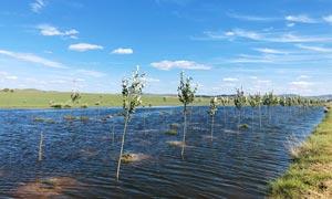 蓝天下的田园河流美景摄影图片