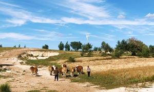 蓝天下的马群和旅友摄影图片