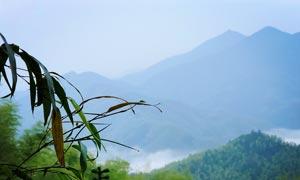 清晨山间美丽的竹叶和露珠摄影图片