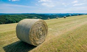 蓝天下的农场秸秆麦堆摄影图片
