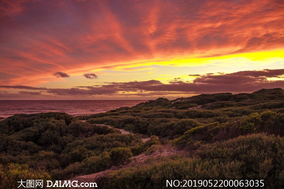 夕阳下的海边和树林美景摄影图片