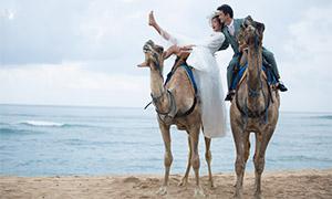 沙滩上骑着骆驼的恋人婚纱摄影原片