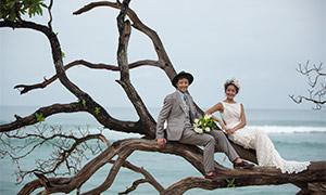 大樹上的一對戀人婚紗攝影原片素材