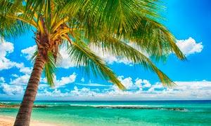 海邊美麗的風光和椰樹攝影圖片