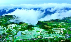 云雾下的梯田全景摄影图片