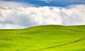 蓝天下的青海湖草原美景摄影图片