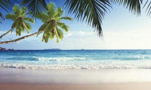 海边沙滩和椰树高清摄影图片