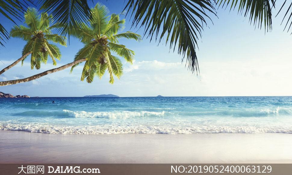 高清图片 自然风景 > 素材信息          夕阳下海港停泊的帆船摄影