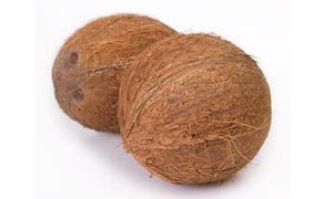 两个大又圆的椰子特写摄影高清图片