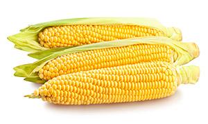 三个带着皮的玉米特写摄影高清图片