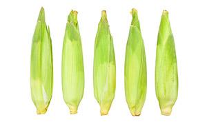 五颗带着外皮的甜玉米特写高清图片
