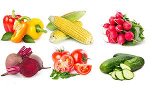玉米辣椒与番茄黄瓜等特写高清图片