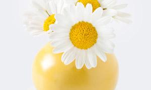 浅黄色瓶子里的小菊花摄影高清图片