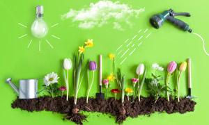 鲜花园艺植物栽培主题摄影高清图片