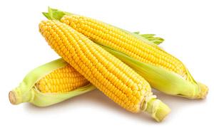 颗粒饱满的几个甜玉米摄影高清图片