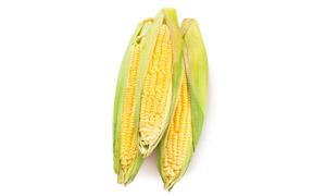 外皮未完全剥去的玉米摄影高清图片