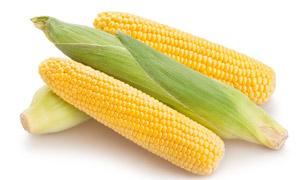 新鲜优选的品质甜玉米摄影高清图片