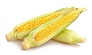 籽粒饱满圆润的甜玉米摄影高清图片