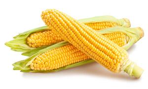 新鲜上市的甜玉米主题摄影高清图片