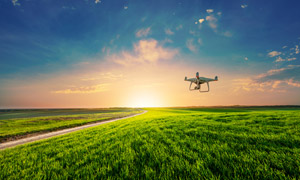 在庄稼地上空作业的无人机高清图片