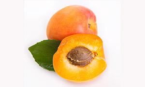 带着绿叶的大黄杏特写摄影高清图片